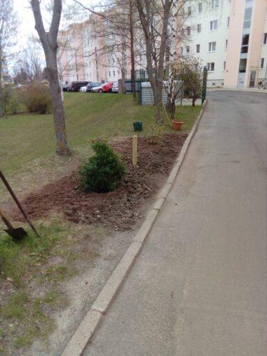 neu gepflanzte Büsche