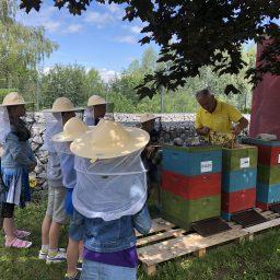 Bienenvolk der Grundschule Harzblick